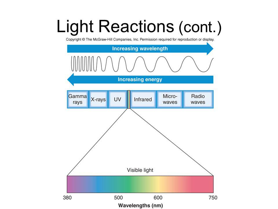 Light Reactions (cont.)