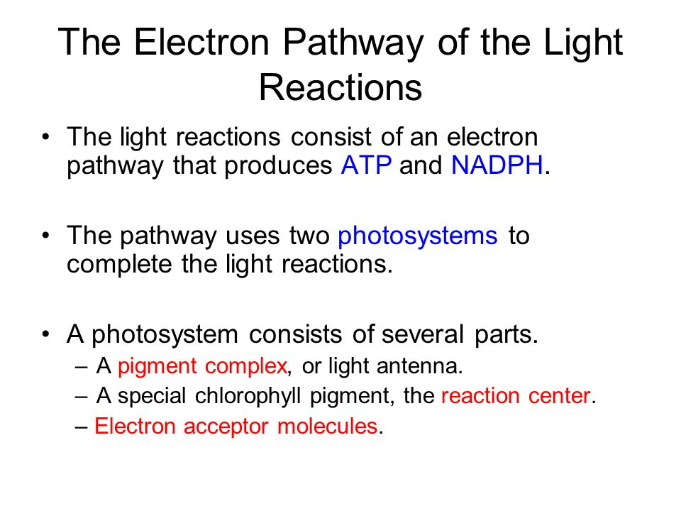 The Electron Pathway of the Light Reactions