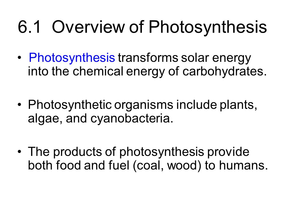 6.1 Overview of Photosynthesis