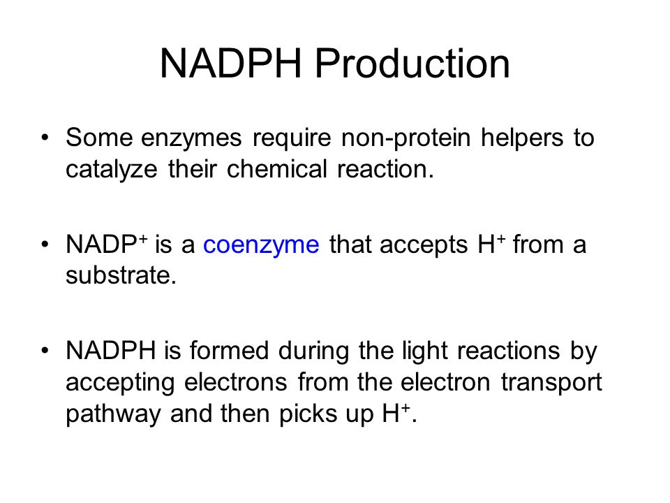 NADPH Production Some enzymes require non-protein helpers to catalyze their chemical reaction. NADP+ is a coenzyme that accepts H+ from a substrate.