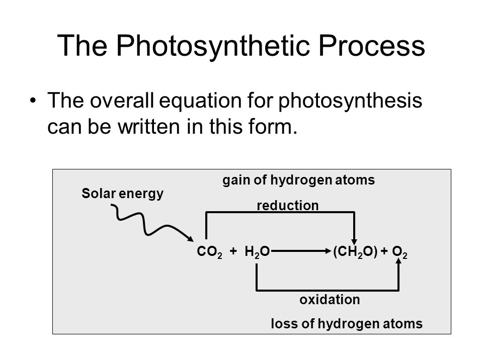 The Photosynthetic Process