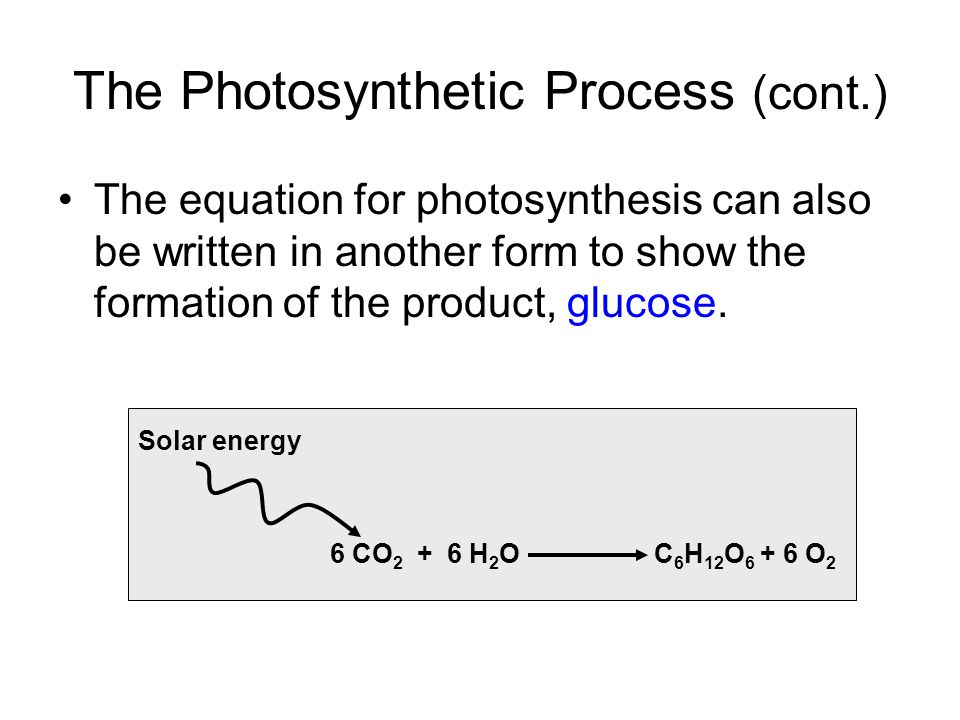 The Photosynthetic Process (cont.)
