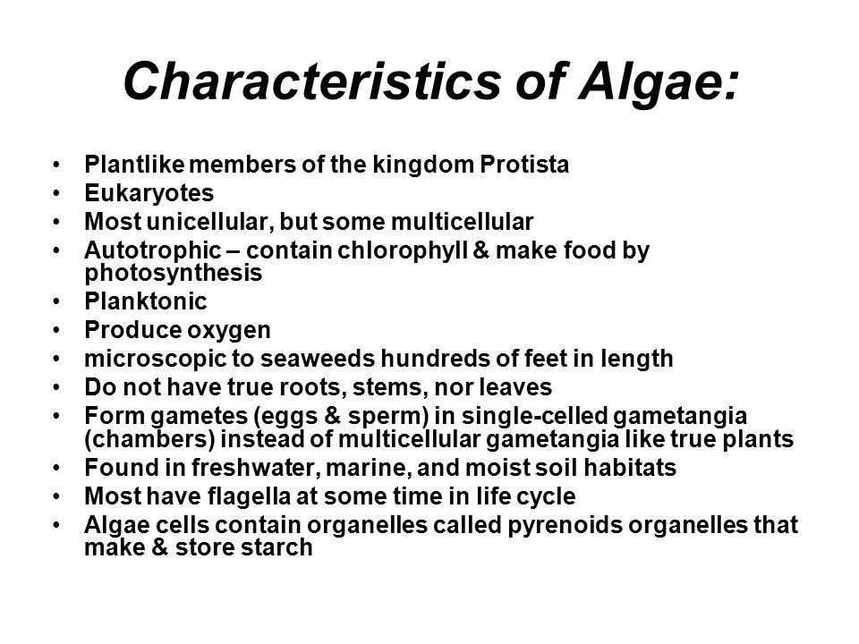 Characteristics of Algae: