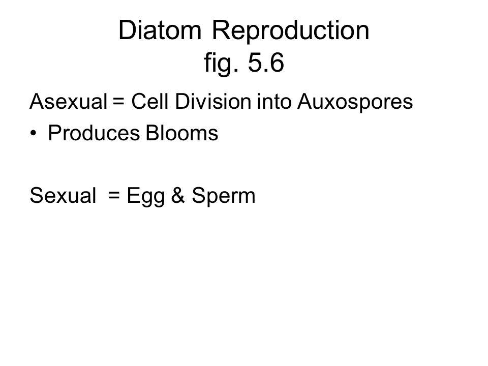 Diatom Reproduction fig. 5.6