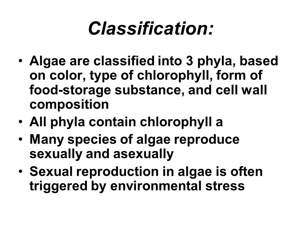 Classification: Algae are classified into 3 phyla, based on color, type of chlorophyll, form of food-storage substance, and cell wall composition.
