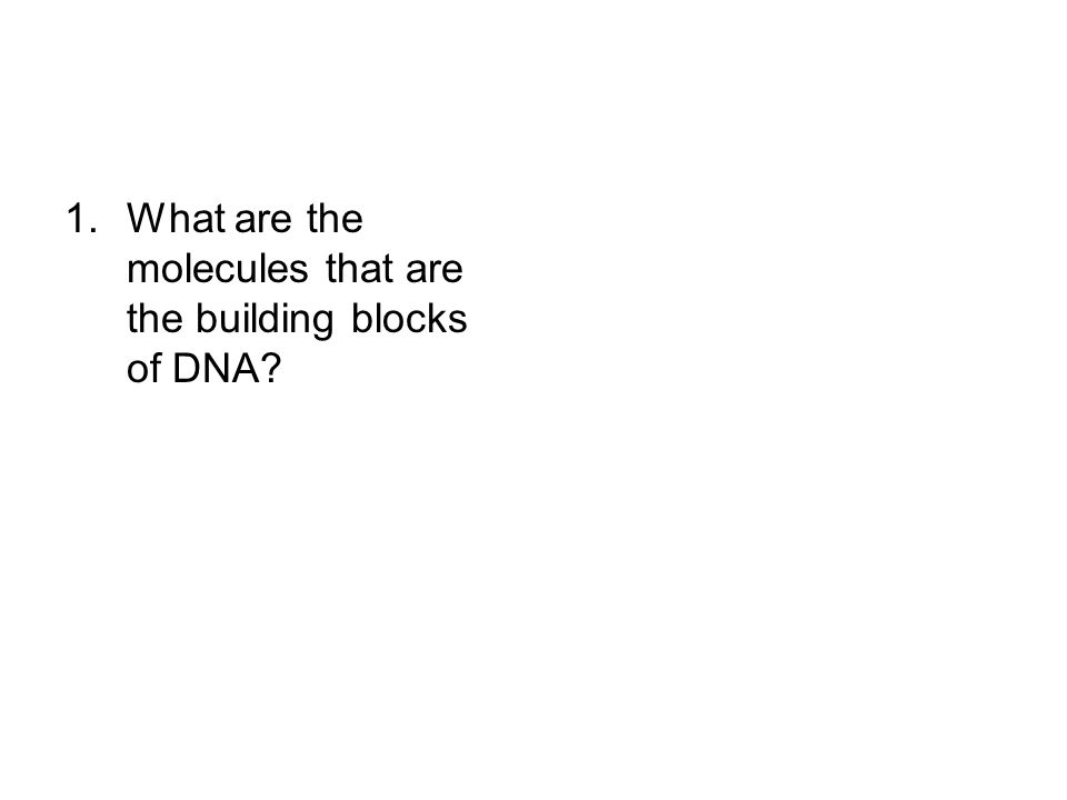 What are the molecules that are the building blocks of DNA