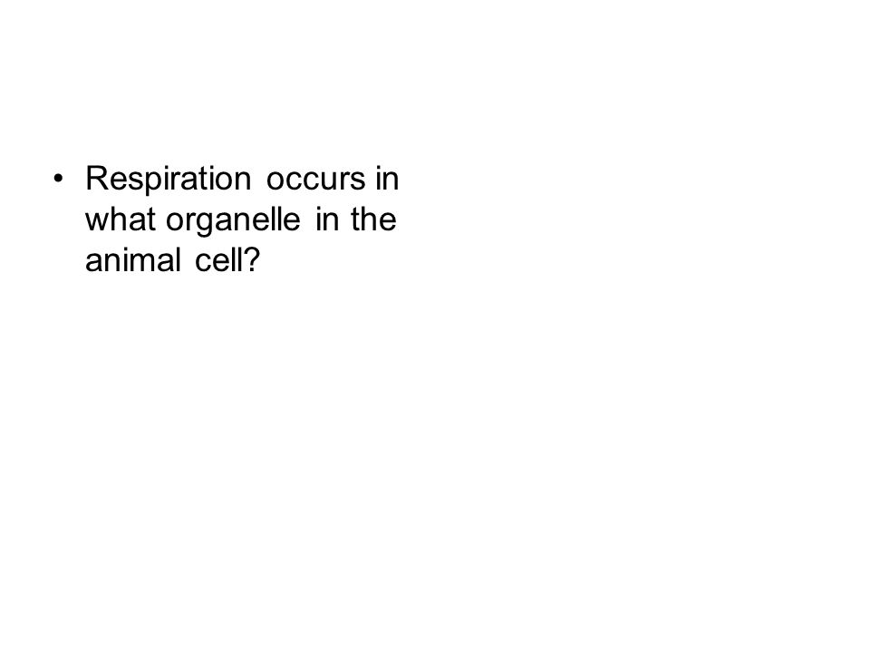 Respiration occurs in what organelle in the animal cell