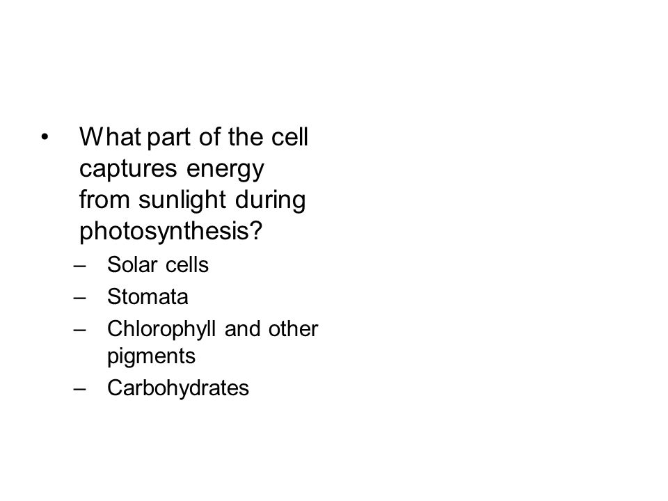 What part of the cell captures energy from sunlight during photosynthesis