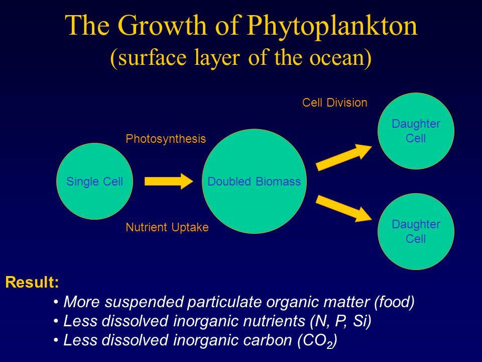 The Growth of Phytoplankton (surface layer of the ocean)