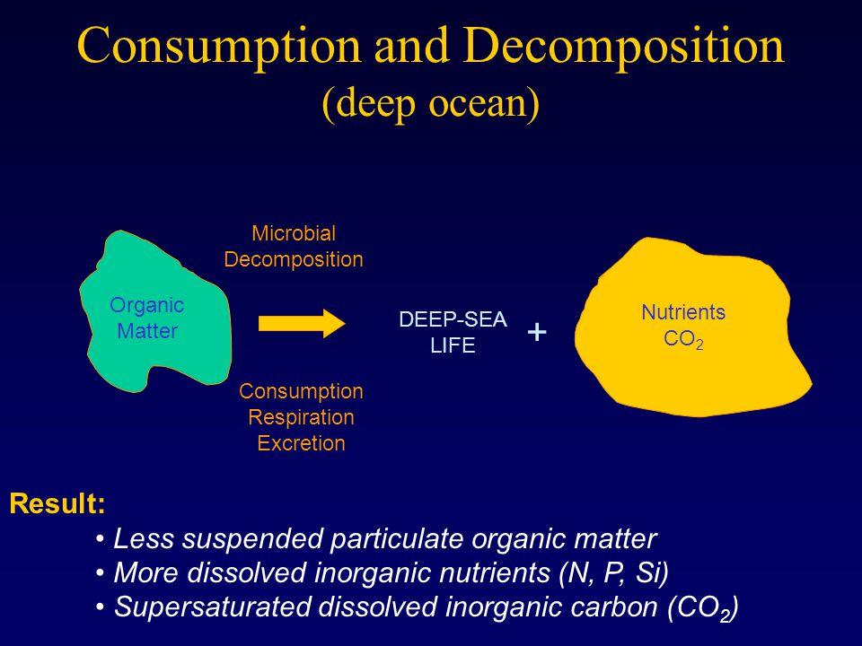 Consumption and Decomposition (deep ocean)