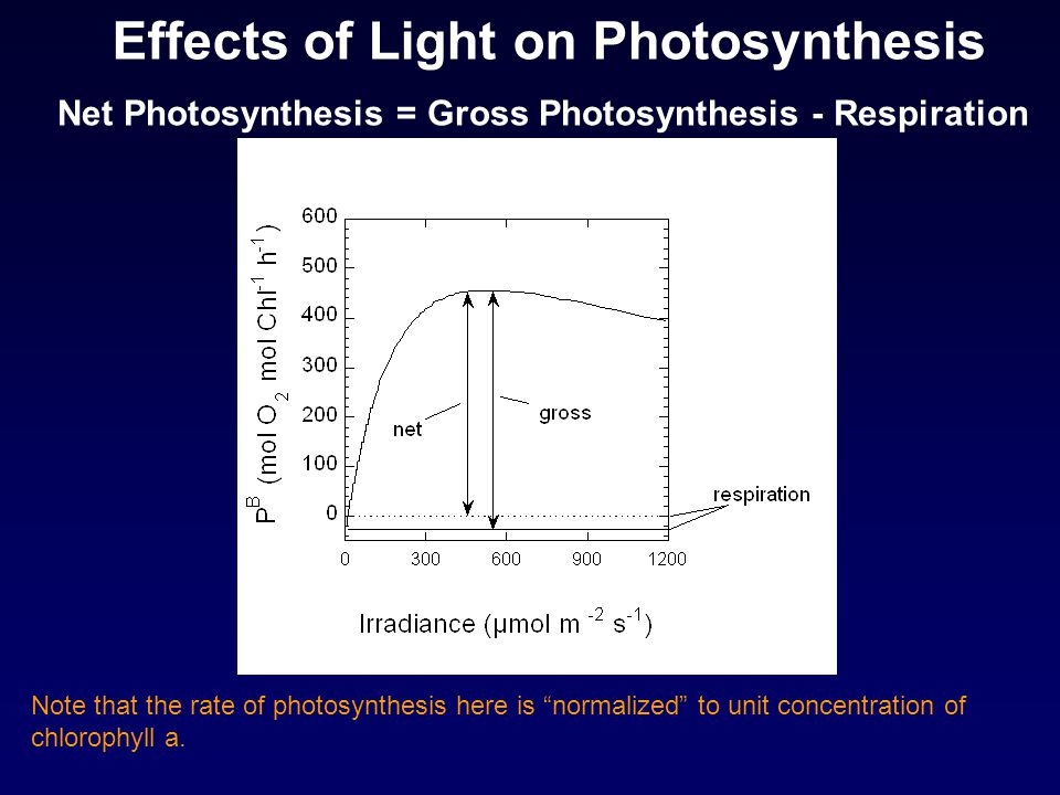 Effects of Light on Photosynthesis