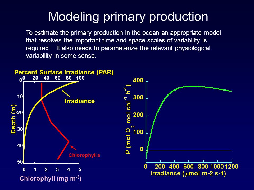 Modeling primary production