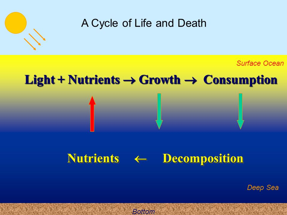A Cycle of Life and Death
