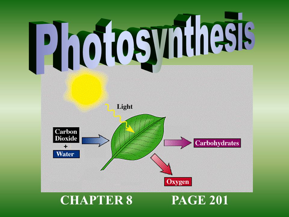 Photosynthesis CHAPTER 8 PAGE 201