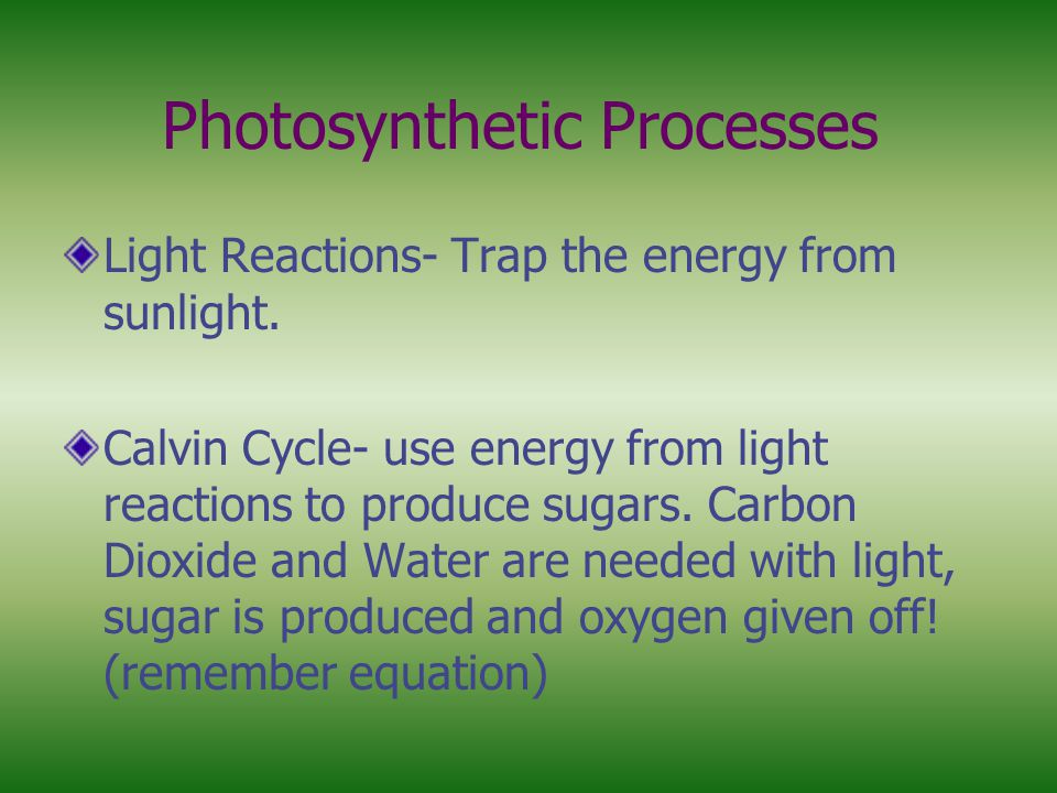 Photosynthetic Processes