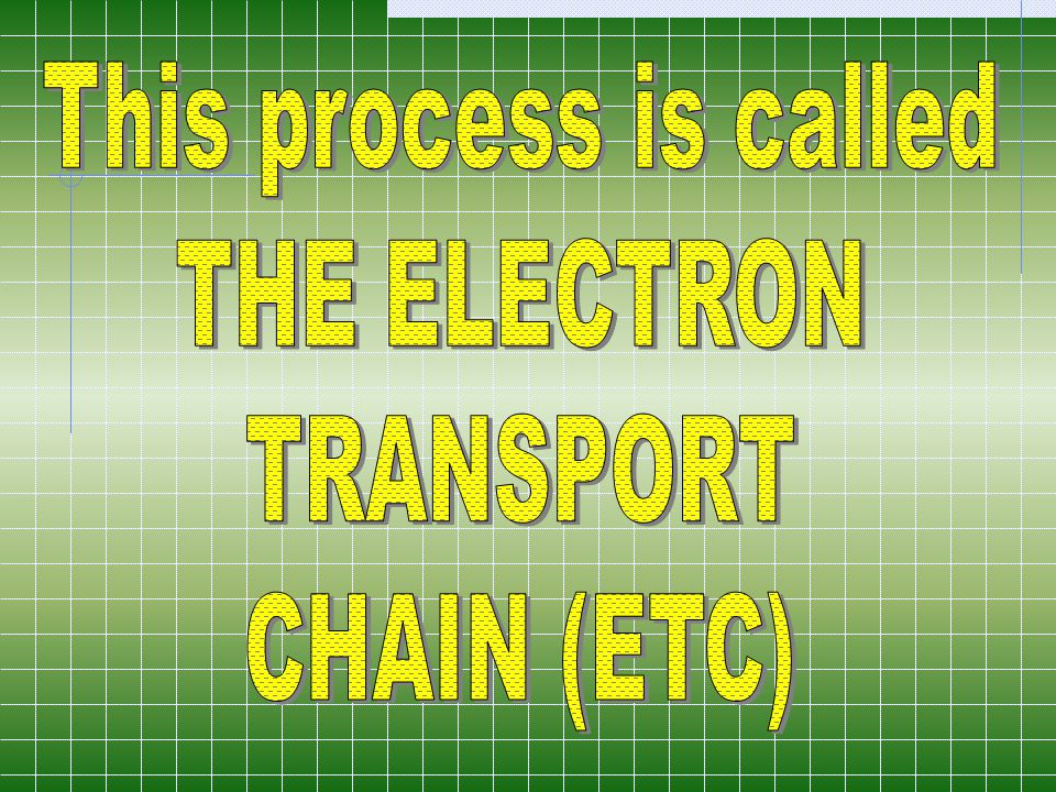 This process is called THE ELECTRON TRANSPORT CHAIN (ETC)