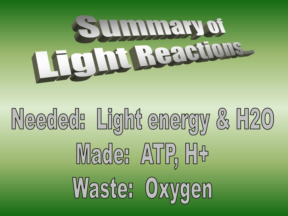 Needed: Light energy & H2O