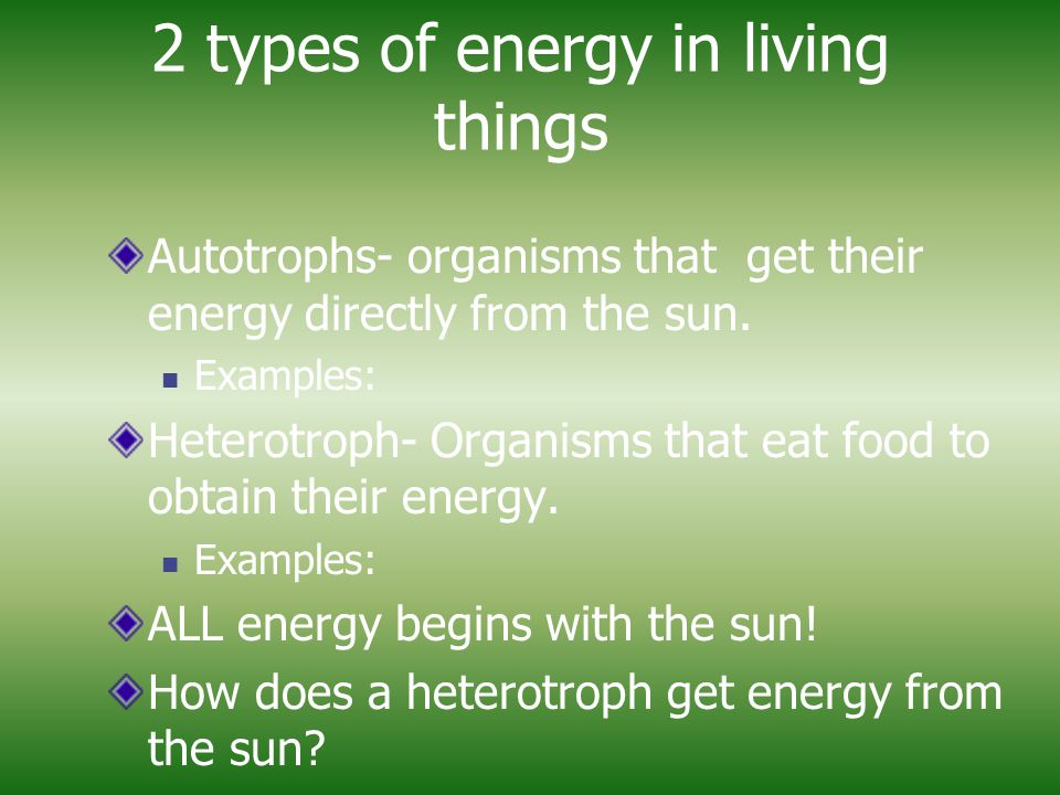 2 types of energy in living things