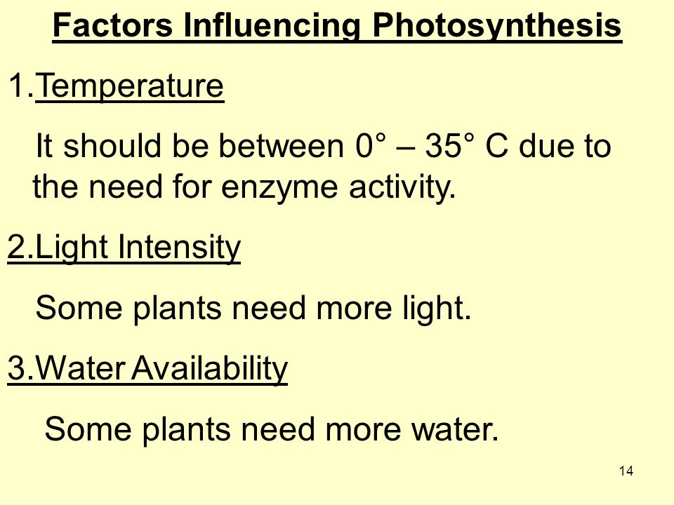 Factors Influencing Photosynthesis