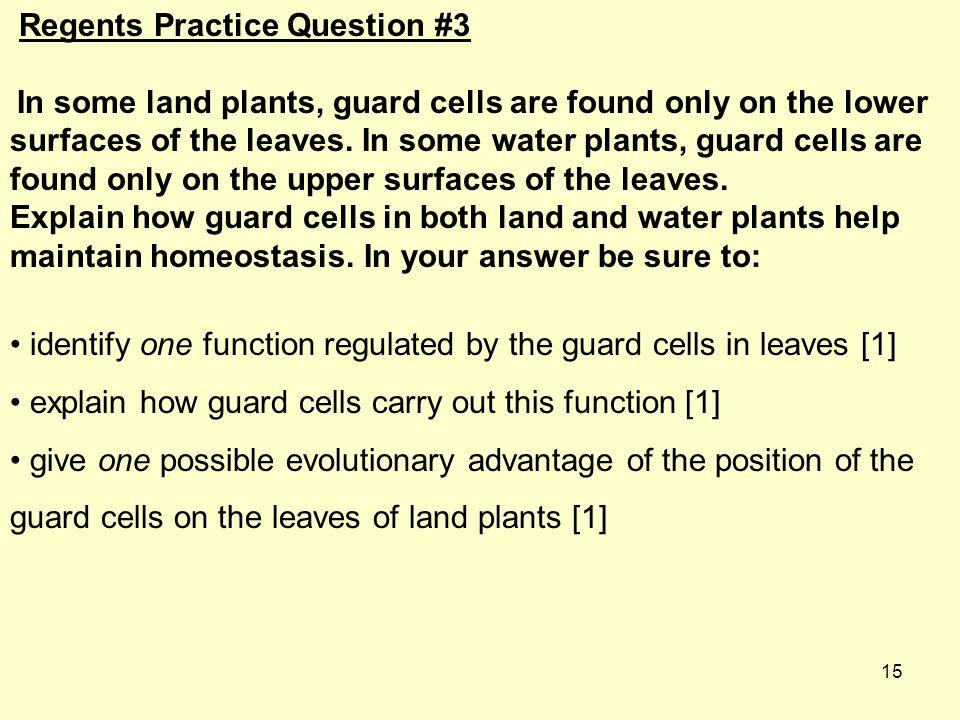 Regents Practice Question #3