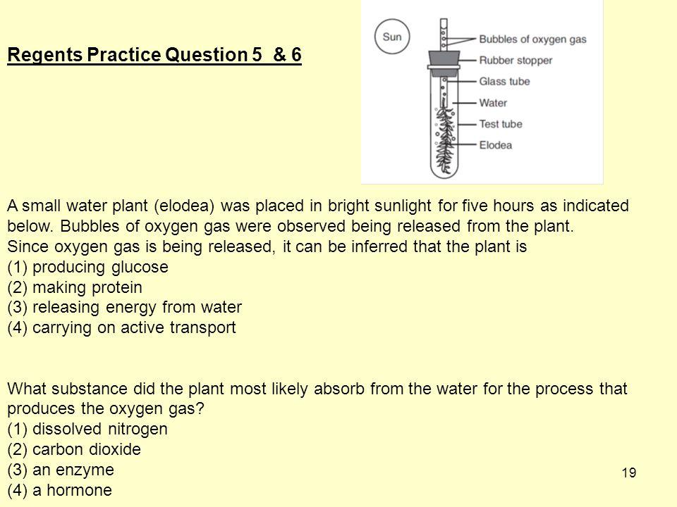 Regents Practice Question 5 & 6