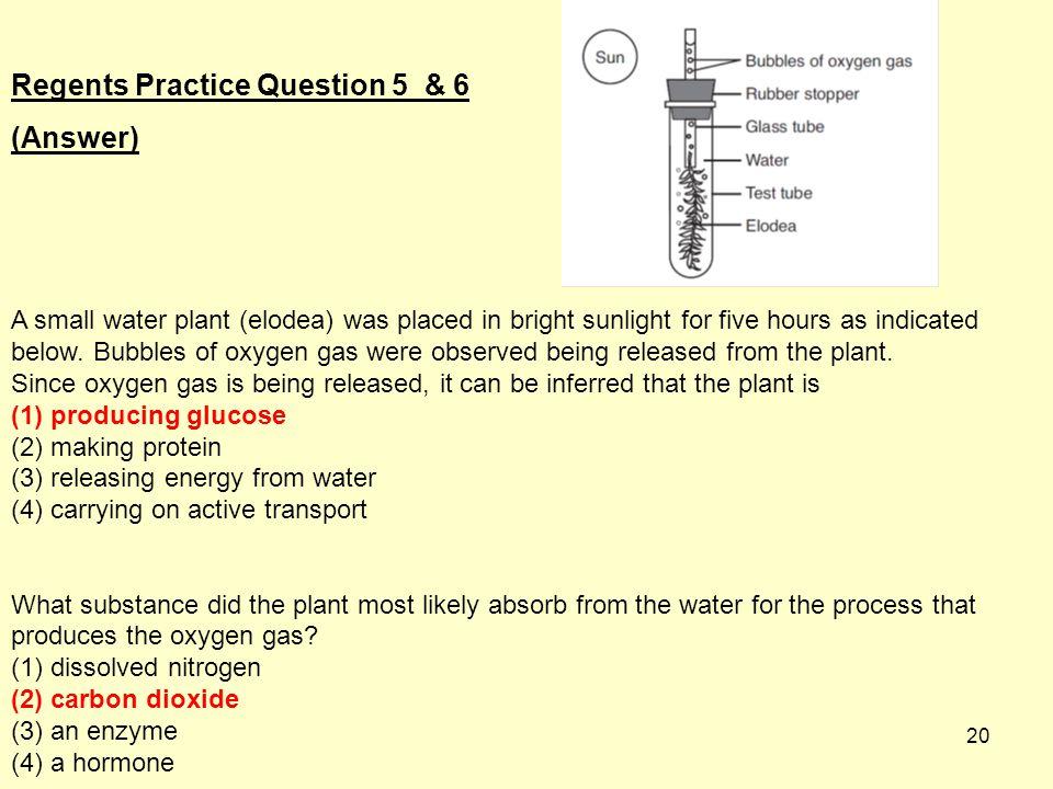 Regents Practice Question 5 & 6 (Answer)