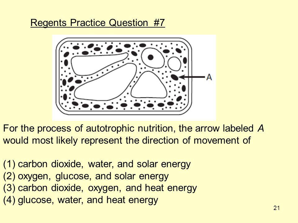 Regents Practice Question #7