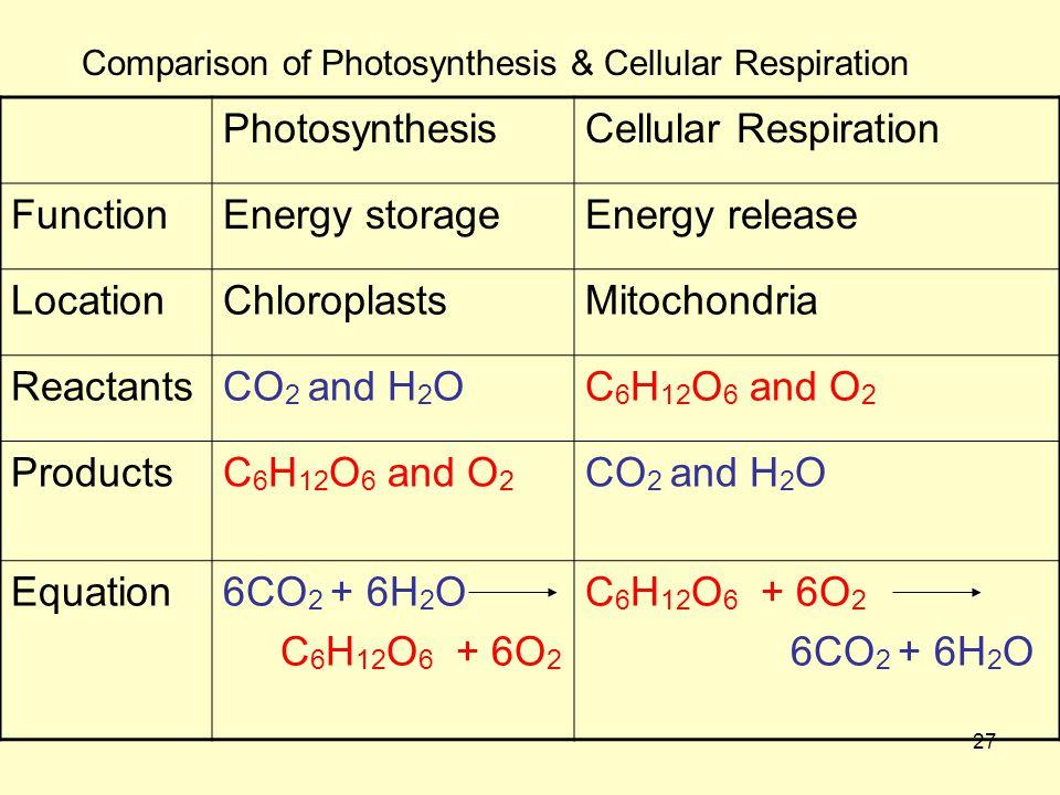 Photosynthesis Cellular Respiration Function Energy storage