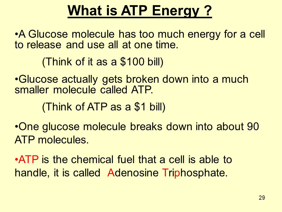 What is ATP Energy A Glucose molecule has too much energy for a cell to release and use all at one time.