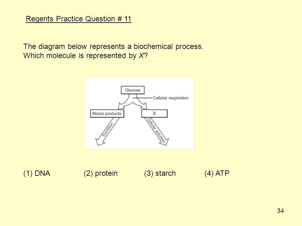 Regents Practice Question # 11