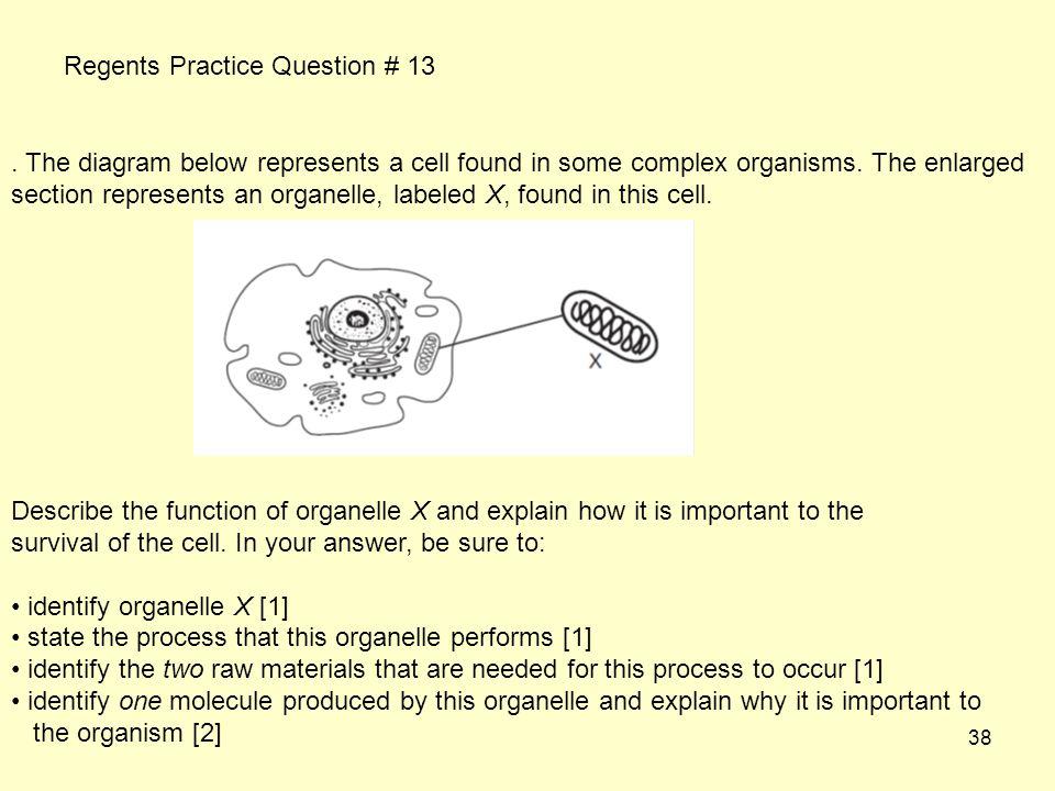 Regents Practice Question # 13