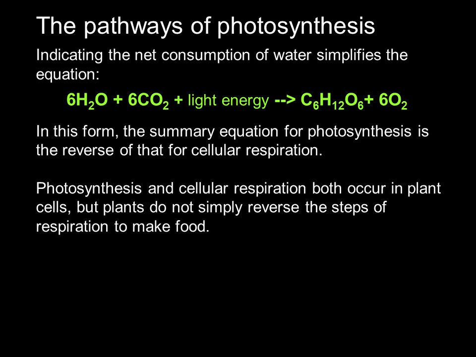 The pathways of photosynthesis
