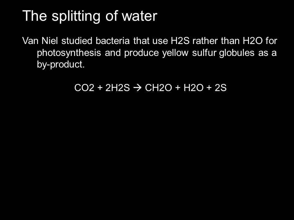 The splitting of water Van Niel studied bacteria that use H2S rather than H2O for photosynthesis and produce yellow sulfur globules as a by-product.