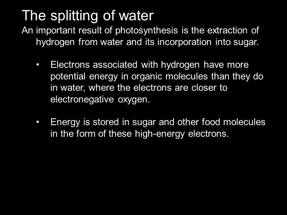 The splitting of water An important result of photosynthesis is the extraction of hydrogen from water and its incorporation into sugar.
