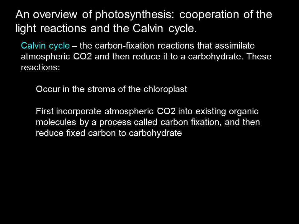 An overview of photosynthesis: cooperation of the light reactions and the Calvin cycle.