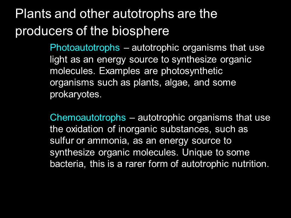 Plants and other autotrophs are the producers of the biosphere