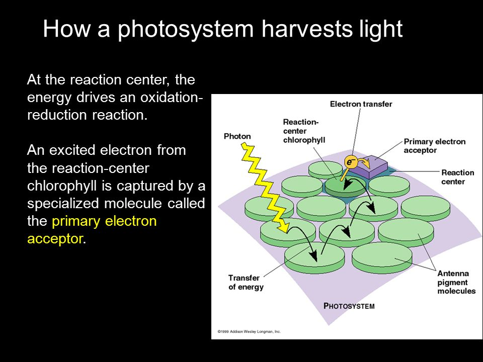 How a photosystem harvests light