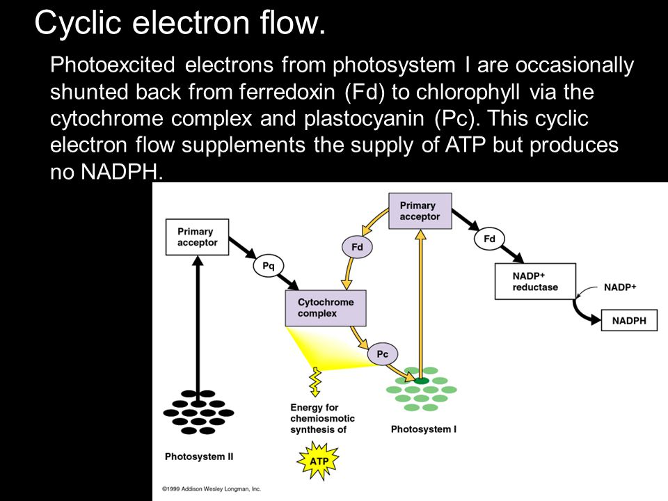 Cyclic electron flow.