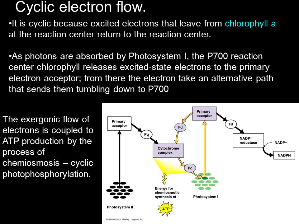 Cyclic electron flow. It is cyclic because excited electrons that leave from chlorophyll a at the reaction center return to the reaction center.
