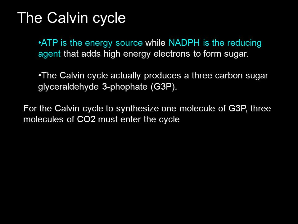 The Calvin cycle ATP is the energy source while NADPH is the reducing agent that adds high energy electrons to form sugar.