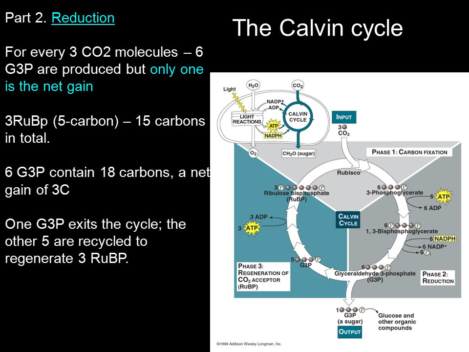 The Calvin cycle Part 2. Reduction