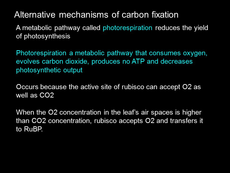 Alternative mechanisms of carbon fixation