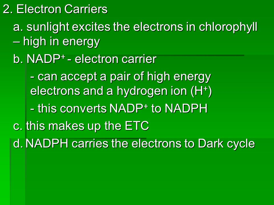 2. Electron Carriers a. sunlight excites the electrons in chlorophyll – high in energy. b. NADP+ - electron carrier.