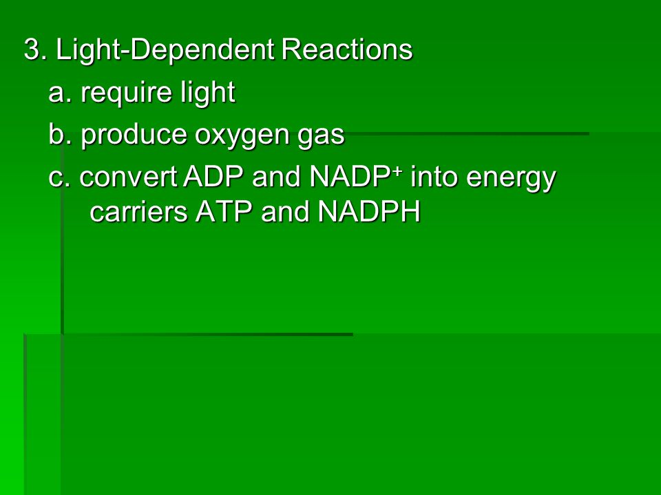 3. Light-Dependent Reactions