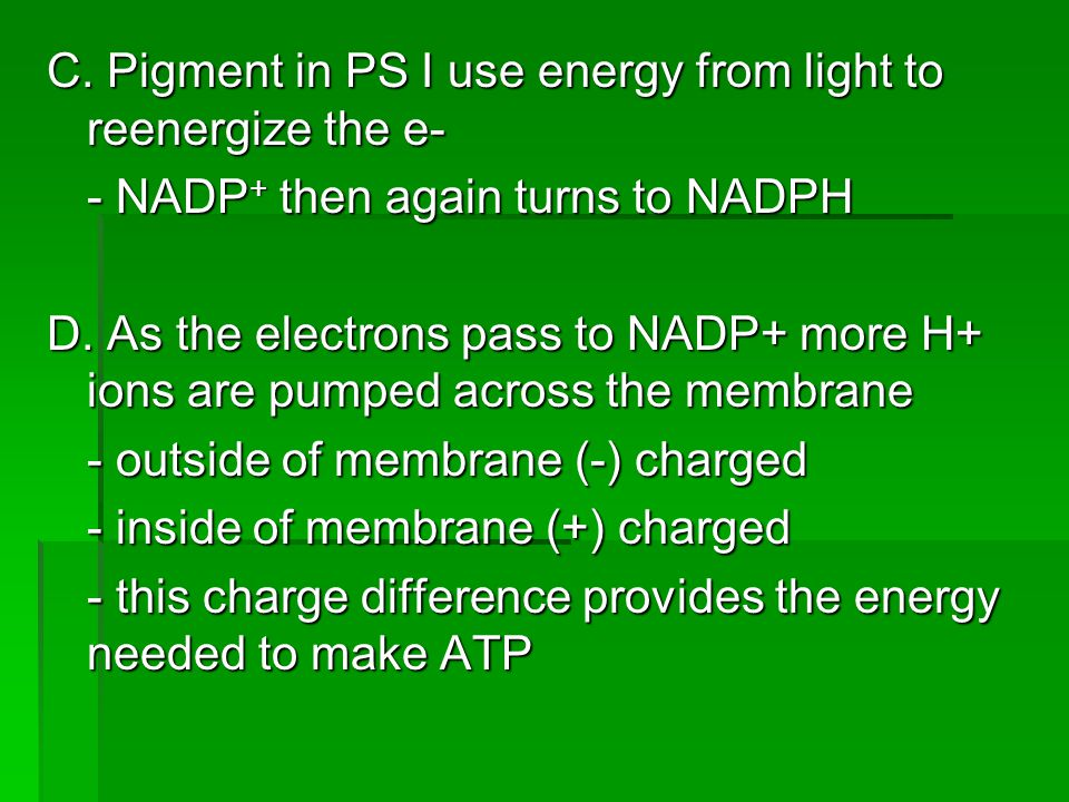 C. Pigment in PS I use energy from light to reenergize the e-