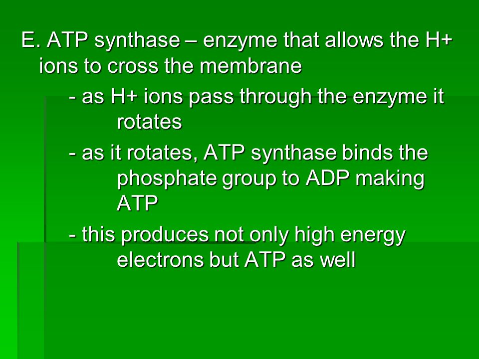 E. ATP synthase – enzyme that allows the H+ ions to cross the membrane