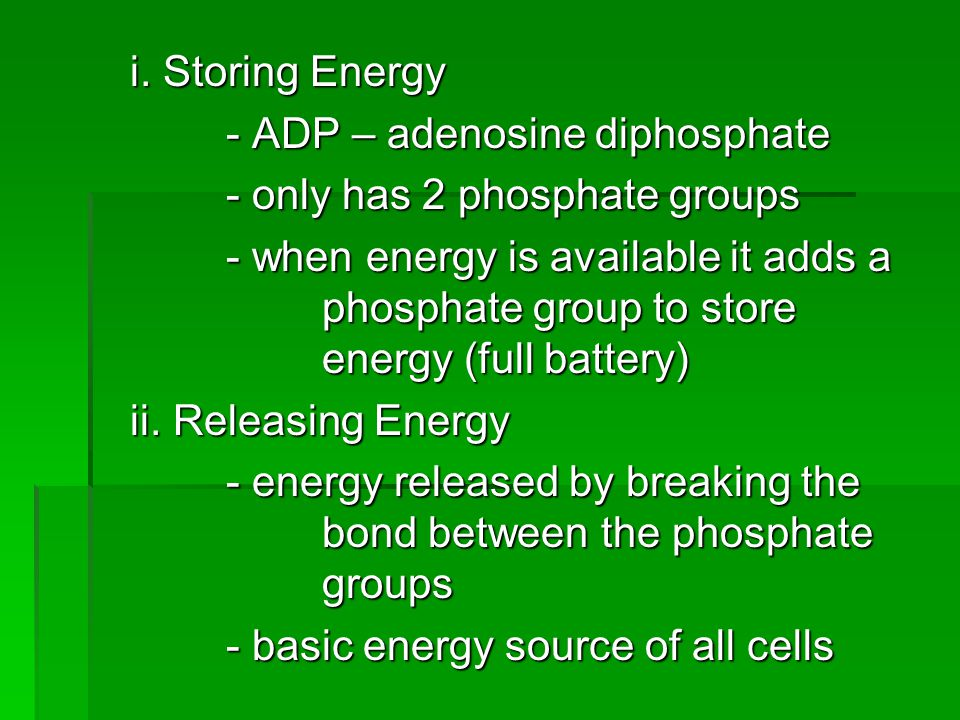 i. Storing Energy - ADP – adenosine diphosphate. - only has 2 phosphate groups.