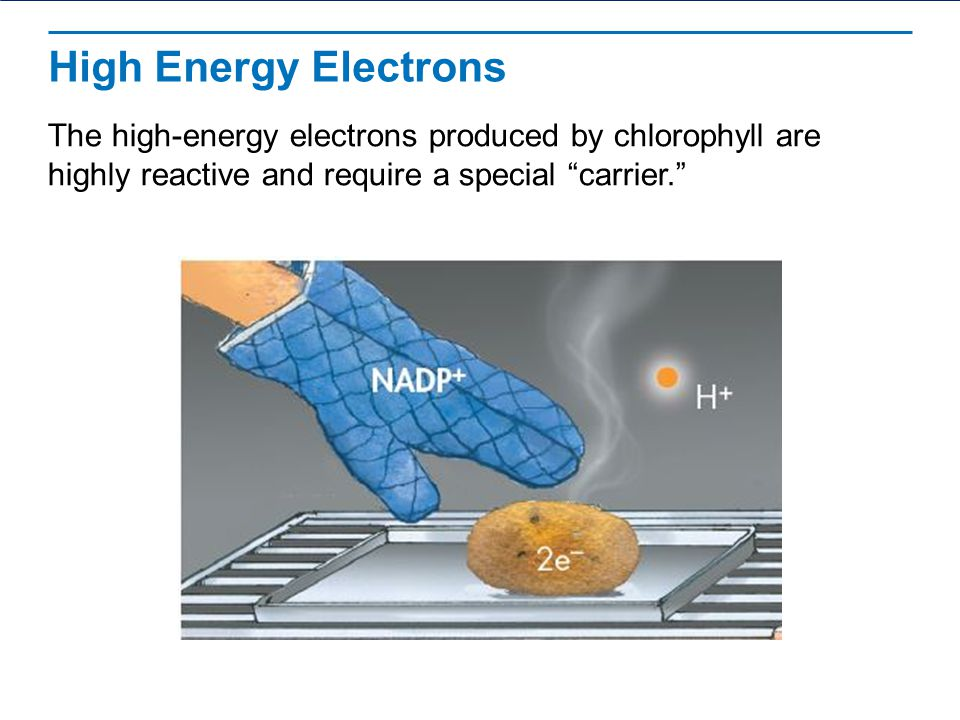 High Energy Electrons The high-energy electrons produced by chlorophyll are highly reactive and require a special carrier.