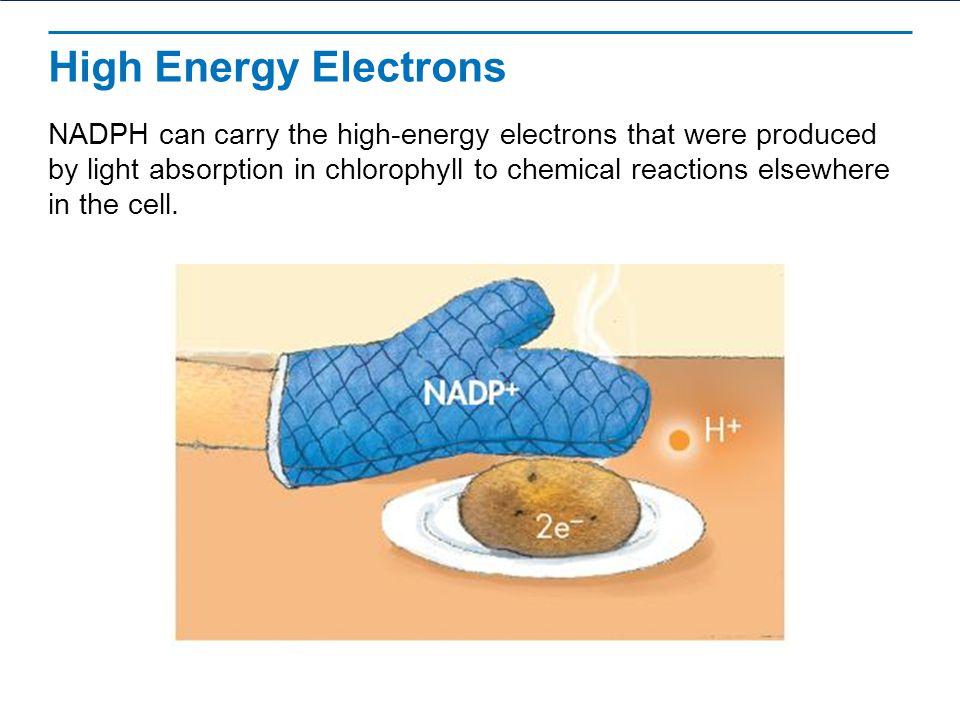 High Energy Electrons
