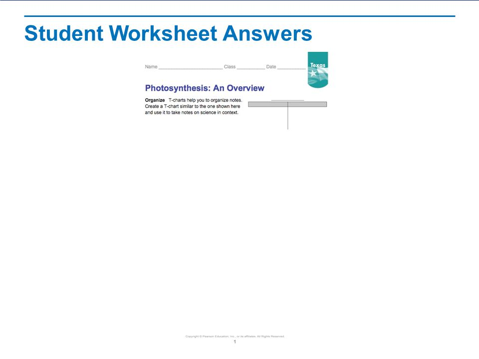Photosynthesis An Overview ppt video online download – Photosynthesis Review Worksheet Answers